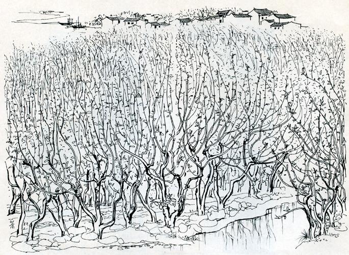 钢笔手绘柳树