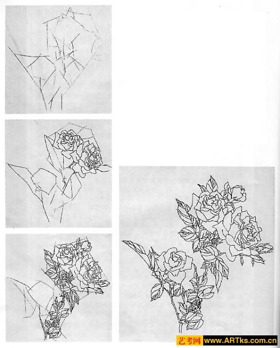 花卉速写的画法 图文教学图片