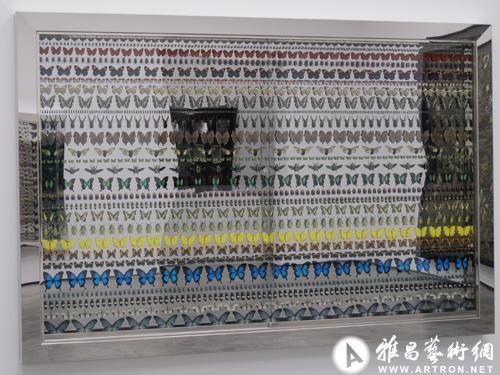 蝴蝶及其他昆虫整齐地以横竖方式排列,置身于镶嵌在墙上的光滑钢框内