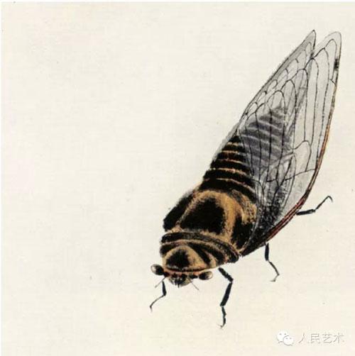 精微素描素材昆虫照片