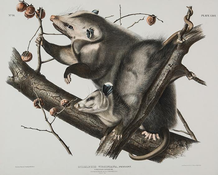 """阿什维尔艺术博物馆推出十九世纪""""打鸟""""艺术大师绘画作品"""