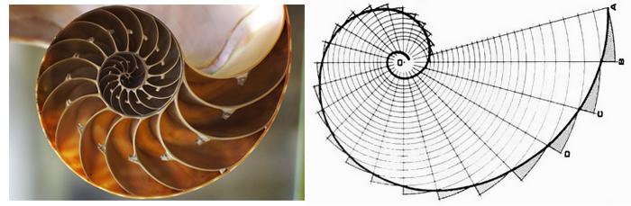 数学中的黄金分割_黄金分割的金苹果—浅谈apple设计中的黄金分割_艺术中国