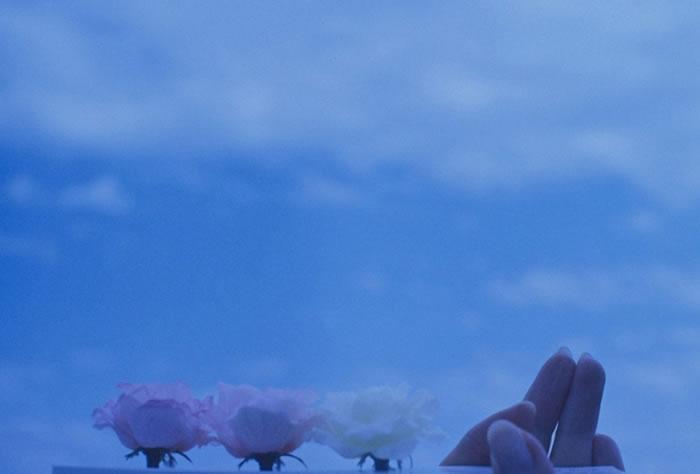 [赏析]花的姿态----艺术其实很朴素....  - 幽幽 - 春江花月夜