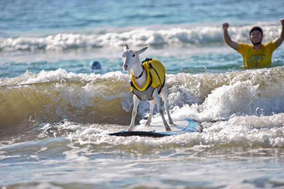 与十大神奇动物一起冲浪