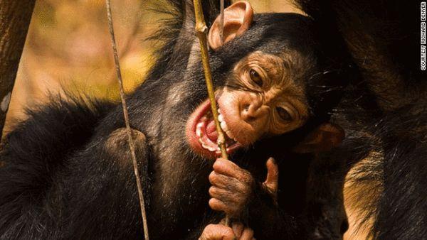 人类亲近自然世界 百万美元濒危动物之旅