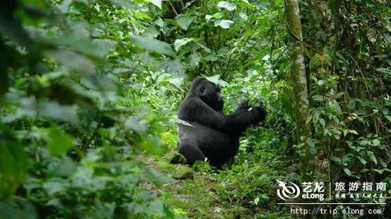 /enpproperty--> 山地大猩猩(乌干达的布温迪森林)    山地大猩猩(图片来源:环球网) 山地大猩猩是目前的稀有物种,是世界现存的最长的灵长类。日前正由于无节制的狩猎、疾病、战争和森林砍伐等原因而濒危。世界上目前仅有约800存活,其中400只都住在布温迪森林。 伯利兹大堡礁(伯利兹)    伯利兹大堡礁(图片来源:环球网) 伯利兹大堡礁是位于北半球的世界最大的大堡礁。这个自然系统有7个景点,是世界最多样的生态系统之一,目前由于海洋污染和气温上升而濒临消失。 山地部落(缅甸掸邦)    山地