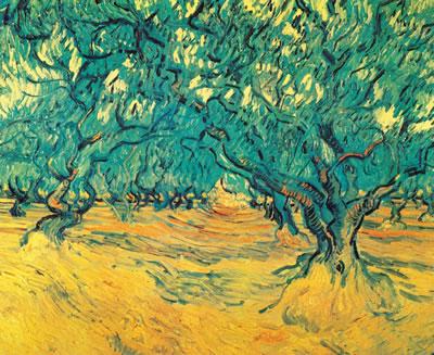 橄榄树,1889 年9